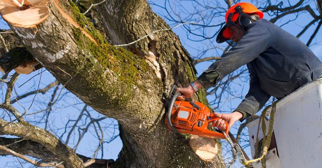 Fall is the Perfect Time to Plant New Trees and Lay New Sod with AAA Tree Service
