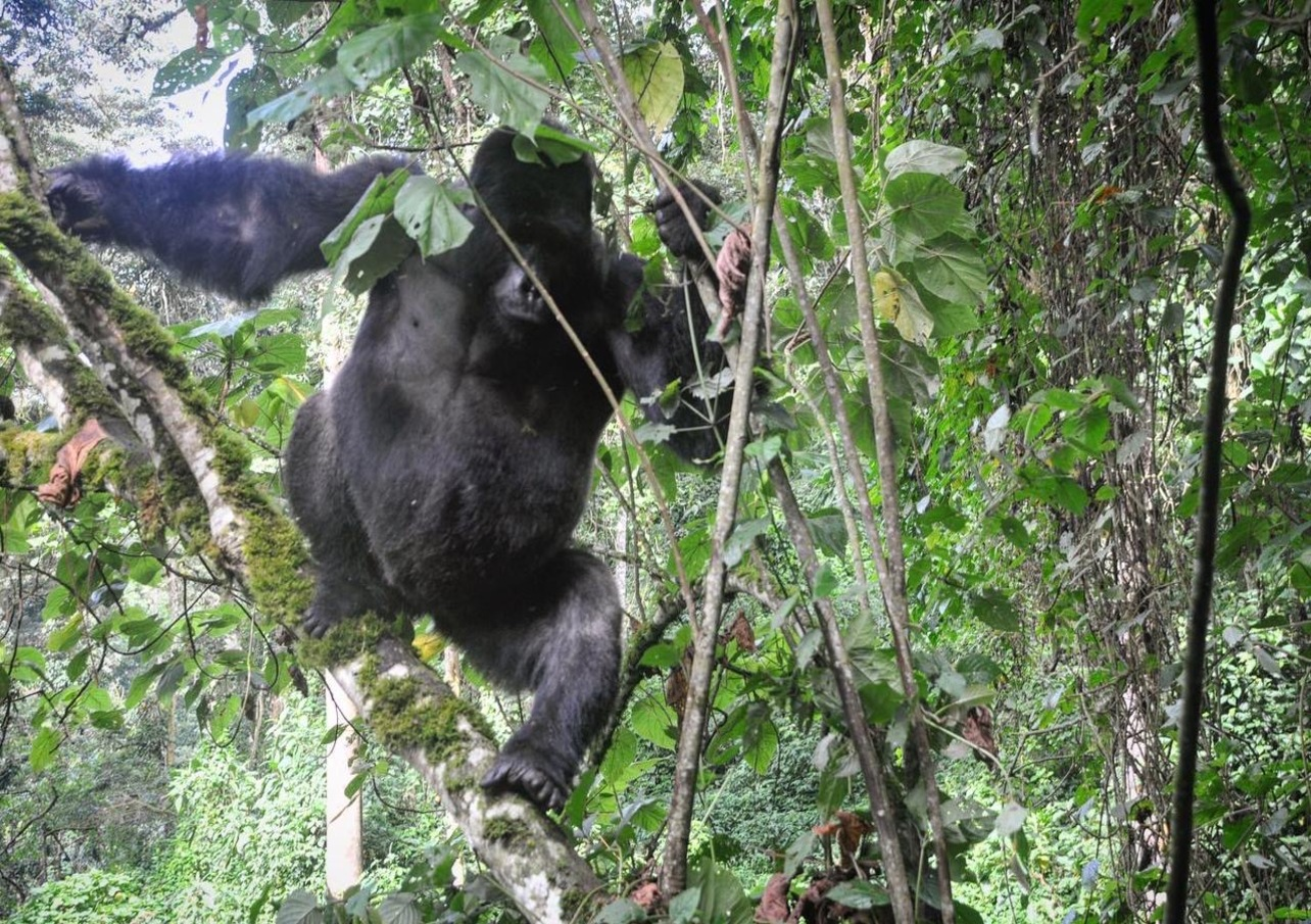 Top Things to do in Rwanda with Devine African Safaris Ltd.