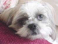 My Baby, Frankie