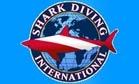 Shark Diving International