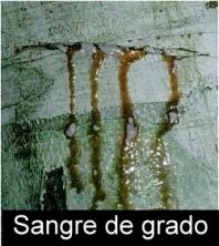 Amazon Botanicals History