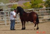 Horses Care History