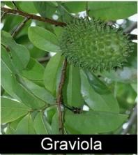 Amazon Botanicals Overview