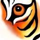 Sumatran Tiger Program Overview