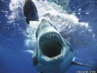 Shark Diving International Overview