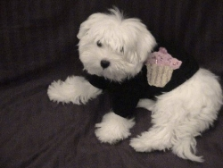 Trendy Fashion Couture Is Going To The Dogs With Jamie Kreitman Doggie T-Shirts
