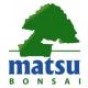 Matsu Bonsai