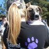 Video Campaign Exceeds Goals, Raises $55,000 for Homeless Animals