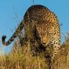 Early Bird Africa Safari Offers Unveiled:  Serengeti – Masai Mara Migration Trip  2018