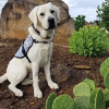 Custom Trained Diabetic Alert Dog Delivered to Woman with Type 1 Diabetes in Ankeny, IA