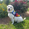 Custom-Trained Autism Service Dog to Help 7-Year-Old Girl in Riva, MD