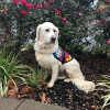Custom Trained Autism Service Dog Delivered to Assist 6-Year-Old Boy in Edmond, OK