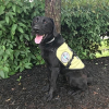 Diabetic Alert Dog Delivered to 16-Year-Old Boy with Type 1 Diabetes in Prescott, Arizona