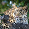 Alluring Africa Voted World's Best Safari Outfitter