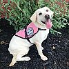 Diabetic Alert Dog Delivered to Woman with Type 1 Diabetes in Cheney, WA