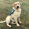 Sdwr Diabetic Alert Dog Delivered to 11-Year-Old Boy in Thornton, CO