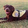 Seizure Response Service Dog Delivered to 17-Year-Old Boy in Fort Valley, Georgia
