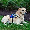 Autism Service Dog Delivered to Assist 10-Year-Old Girl in Hawthorne, NJ