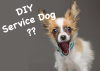 DIY Service Dogs? Medical Mutts Launches Online Service Dog Classes