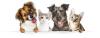 "OC Wellness Solutions Releases 4th of July ""Happy Pet"" CBD Bundle"