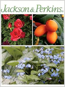 Catalogs.com Gardening Catalog Jackson & Perkins