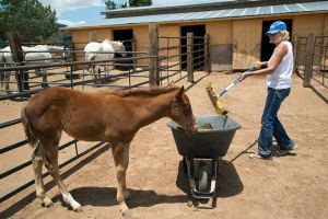 Orphaned filly, Hope, gets a new lease on life at Walkin' N Circles Ranch
