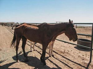 One of the many horses that come to the NM Horse Rescue at Walkin' N Circles Ranch