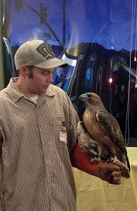 "Wildlife Ambassador, ""Spirit"" with a volunteer from Eastern Sierra Wildlife Care"