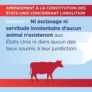 Section 1 - French