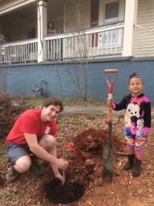 Neighbors planting an apple tree along the sidewalk in Chosewood neighborhood